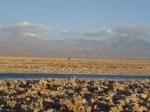 Laguna de Chaxa (Jose Ferri)