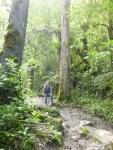 Bosque tropical Valle del cocora (Jose Ferri)