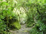 Bosque tropical Valle del cocora 2 (Jose Ferri)