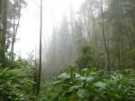 El bosque de niebla (Jose Ferri)
