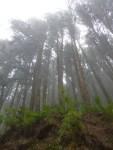 Bosque de niebla 2 (Jose Ferri)