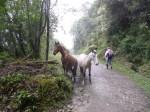 Dani y los caballos (Jose Ferri)
