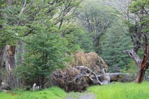 bosques patagonicos6  (Jose Ferri)