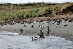 Pingüinos 3 (Jose Ferri)