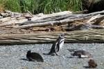 Pingüinos 2 (Jose Ferri)
