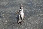 Pingüinos (Jose Ferri)