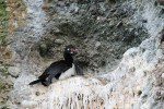 cormoranes y crias (Jose Ferri)