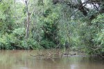 Paseo ecológico en Iguazú 3 (Jose Ferri)