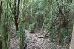 Bosque en Chiloe_Jose Ferri