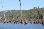 Bosque muerto Chiloe 2_Jose Ferri