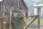 Cordero secandose Chiloe_Jose Ferri