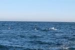 Delfines en Monterrey_Jose Ferri