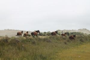 Estampida caballos playa Cucao Chiloe_Jose Ferri