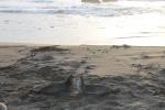 Leones marinos discutiendo_Jose Ferri