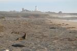 Leones marinos en la playa_Jose Ferri