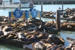 Leones marinos en pier 39_Jose Ferri