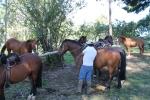 Preparando los caballos Chiloe_Jose Ferri