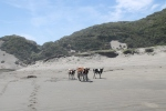 Vacas on the beach 2_Jose Ferri