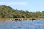 Vacas on the beach_Jose Ferri