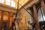 American-Natural-History-hall-jose-ferri